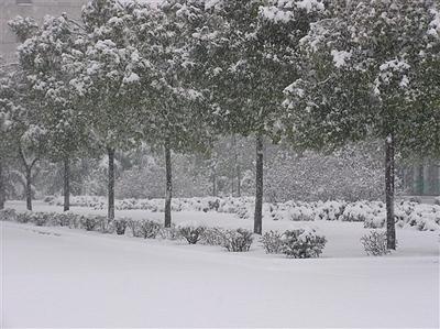 17:12:44    还记得小时候故乡的冬天很冷,立冬一过,见天就飘起了雪花