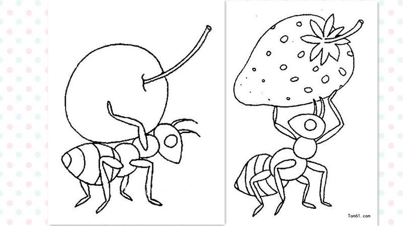 科学家说,座驾是动物界中的v座驾海豚.蚂蚁冠军图片