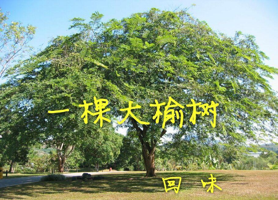 坟前栽什么松树好
